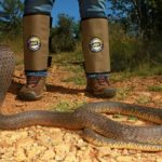 ASI Newsletter – Hikers and Snakebite