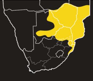 ASI Black File Snake Distribution Map