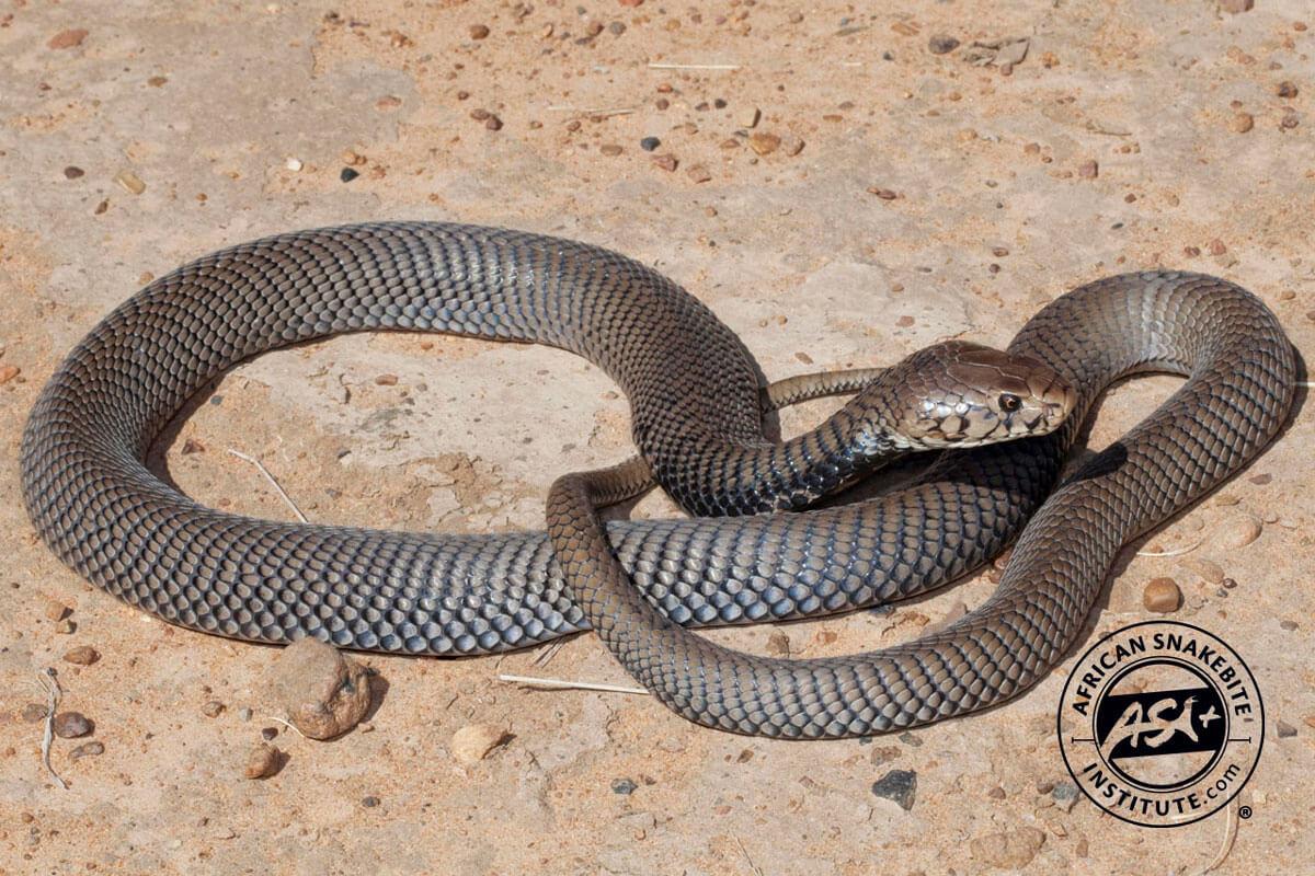 Snake Pdf Ing