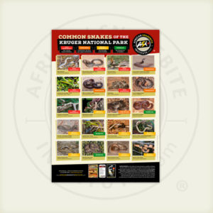 ASI Common Snakes of the Kruger National Park Poster