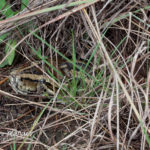 ASI Newsletter – Snakes and Drought