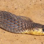 ASI Newsletter – Snakes and hibernation
