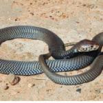 ASI Newsletter – Snake Season