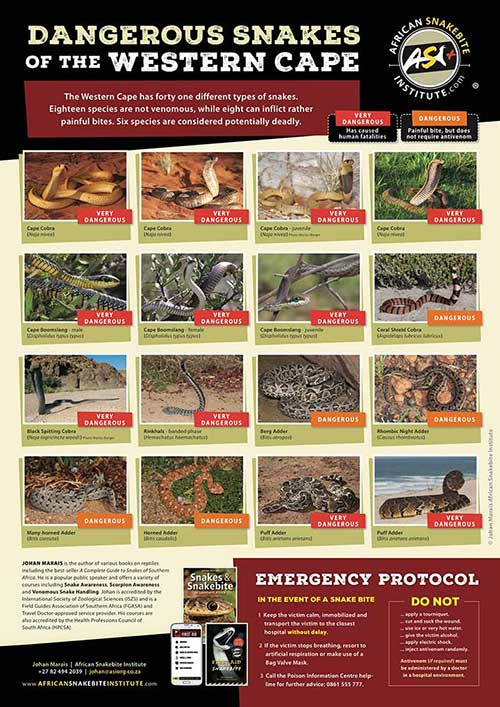 Snake Information Posters