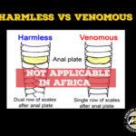 """Harmless vs Venomous"""