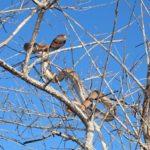 ASI Newsletter – Snakes in trees