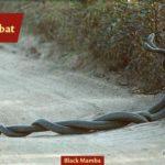 ASI Newsletter – Summer is Snake Season