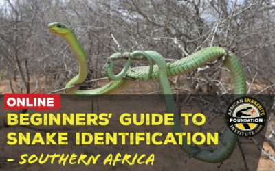 Online Course – Beginners' Guide to Snake Identification (Southern Africa)
